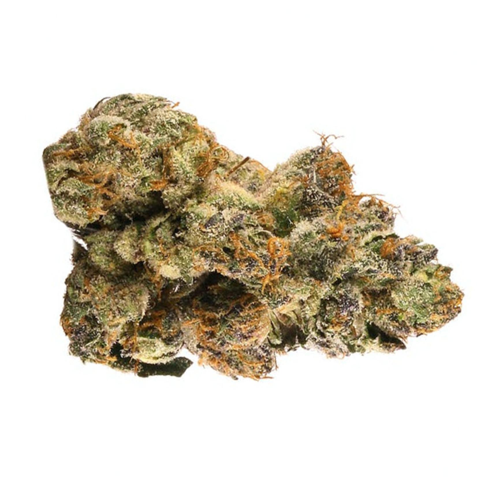 Auto Gelato #33 cannabis seeds