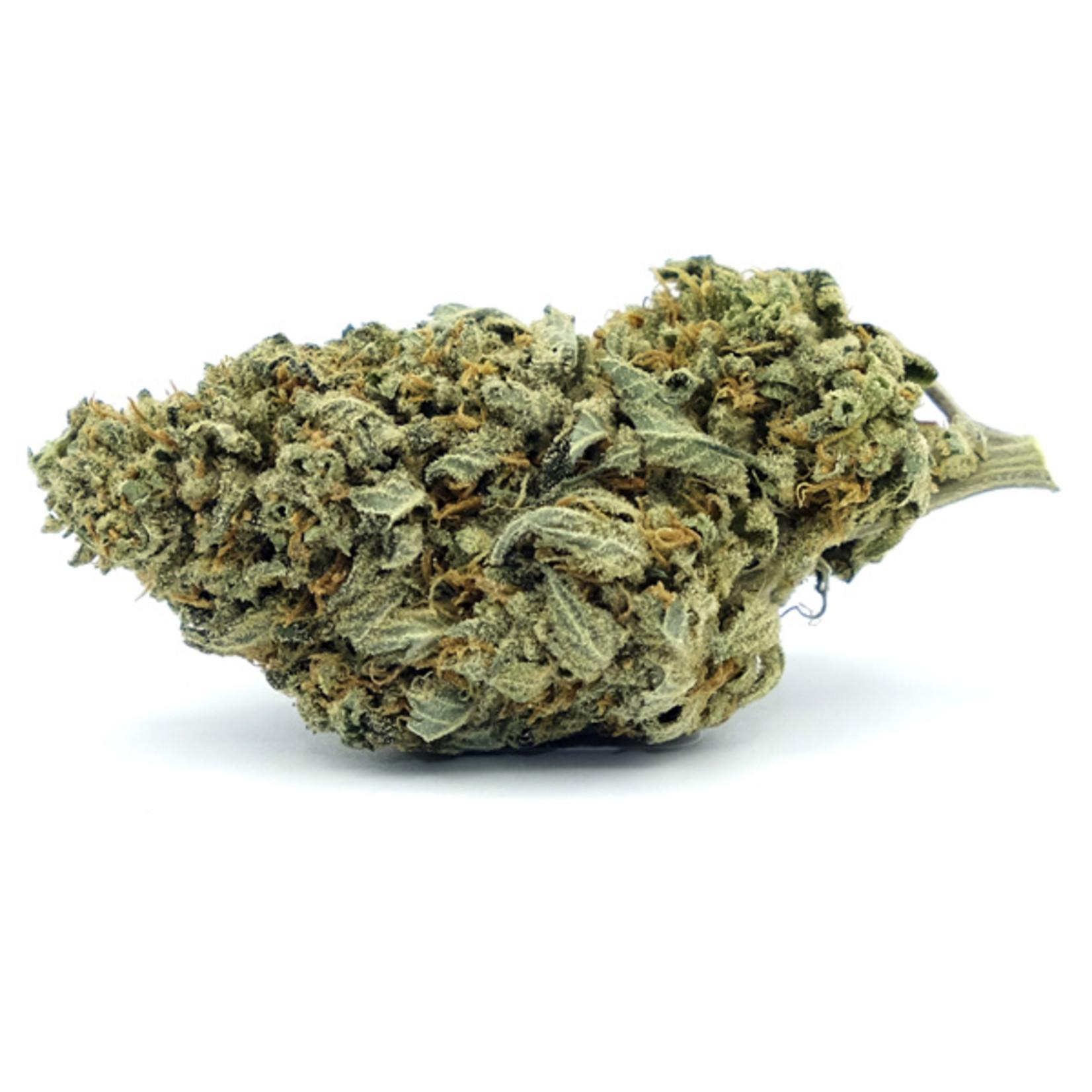 Auto Gorilla Glue #4 Cannabis Seeds