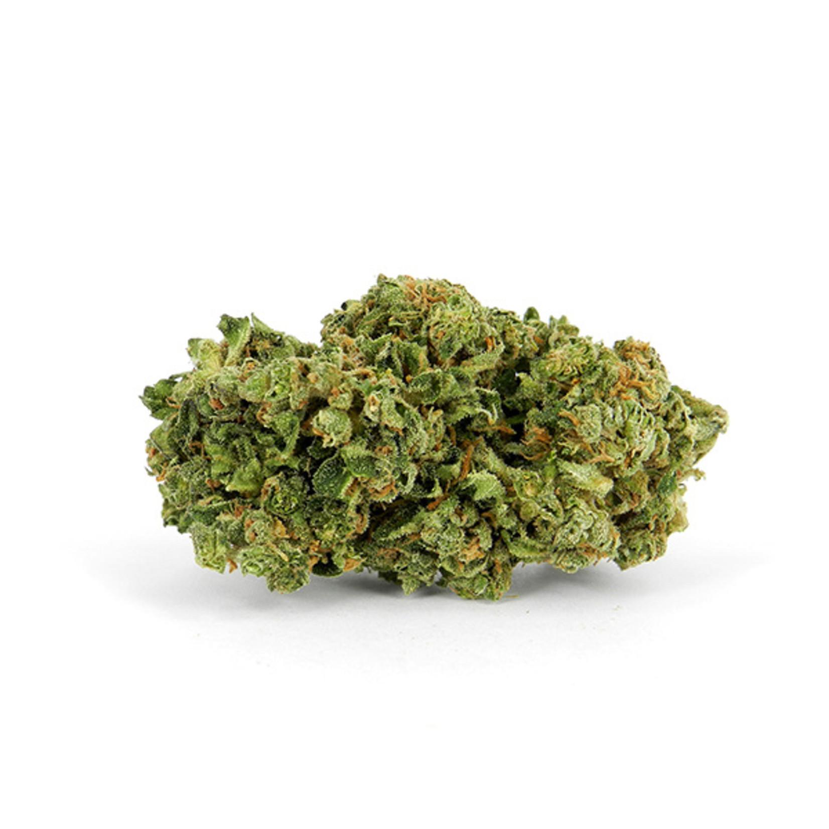 Auto Magnum Cannabis Seeds