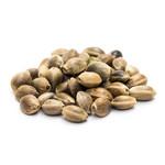 Feminized cannabis seeds