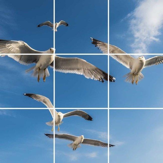 PURPL Techo de Nubes y Aves | Panel de techo fotográfico de acrílico | [IMG15]