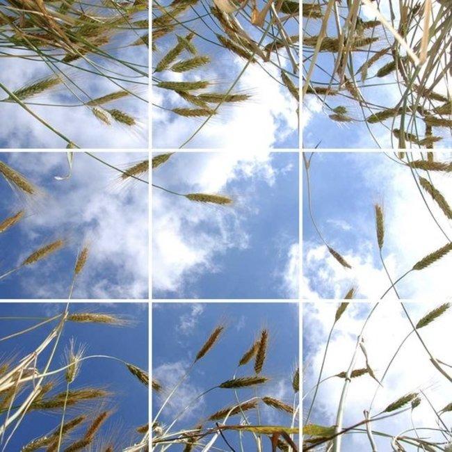 PURPL Techo de Nubes y Trigo | Panel de techo fotográfico de acrílico | [IMG21]
