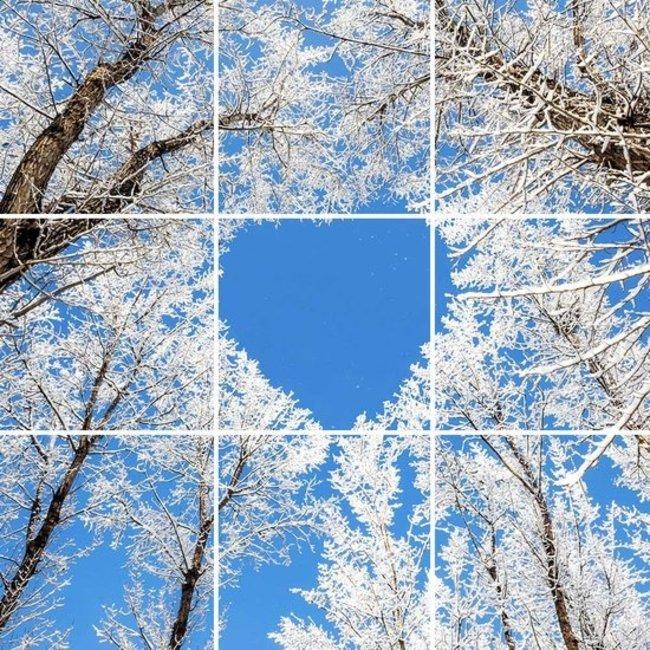 PURPL Techo de Nubes y Árboles de Invierno | Panel de techo fotográfico de acrílico