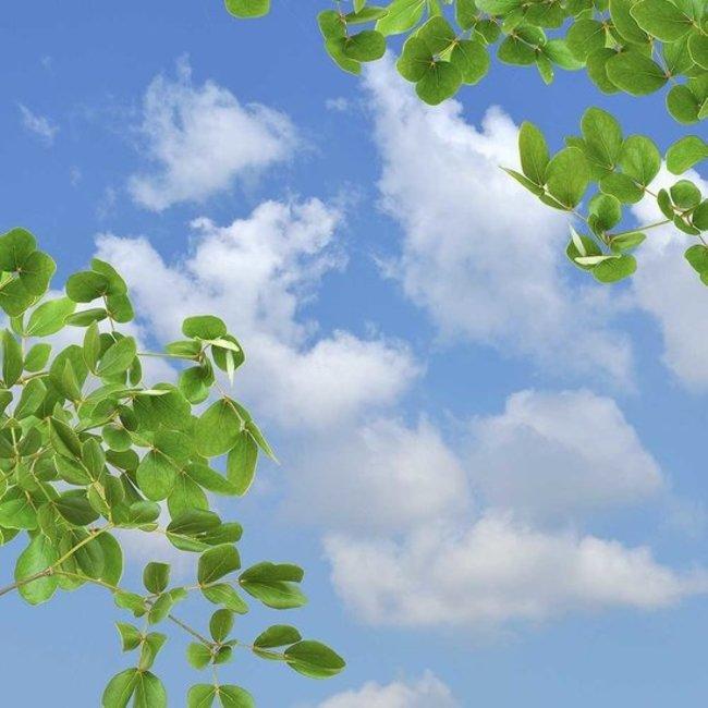 PURPL Techo de Nubes y Hojas   Imagen sobe lienzo en marco Led   [IMG11]