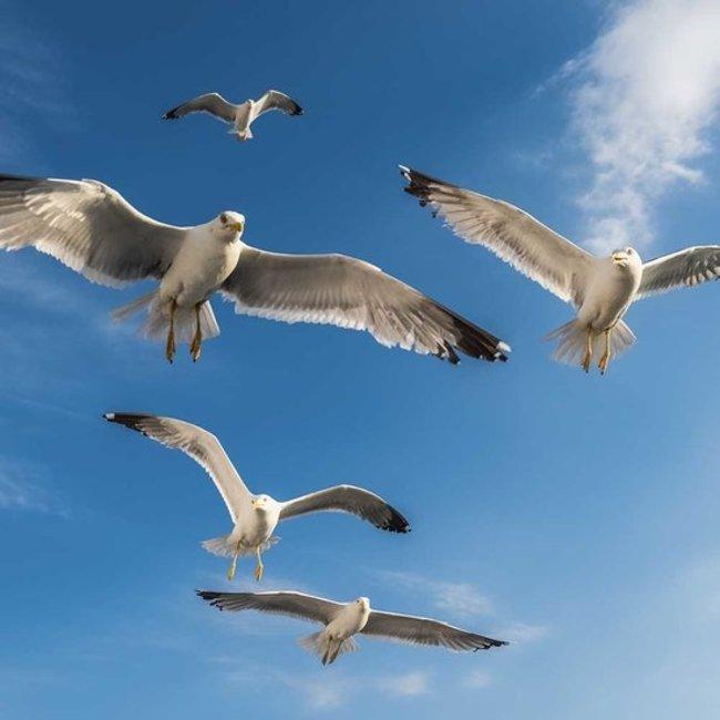 PURPL Panel Aves Cielo | Imagen sobe lienzo en marco Led | [img15]