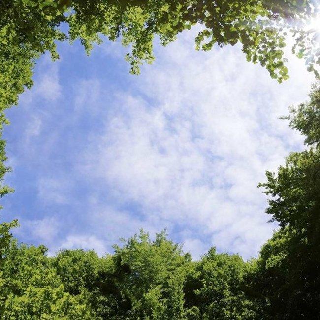 PURPL Techo de Nubes y Árboles | Imagen sobe lienzo en marco Led | [img1]