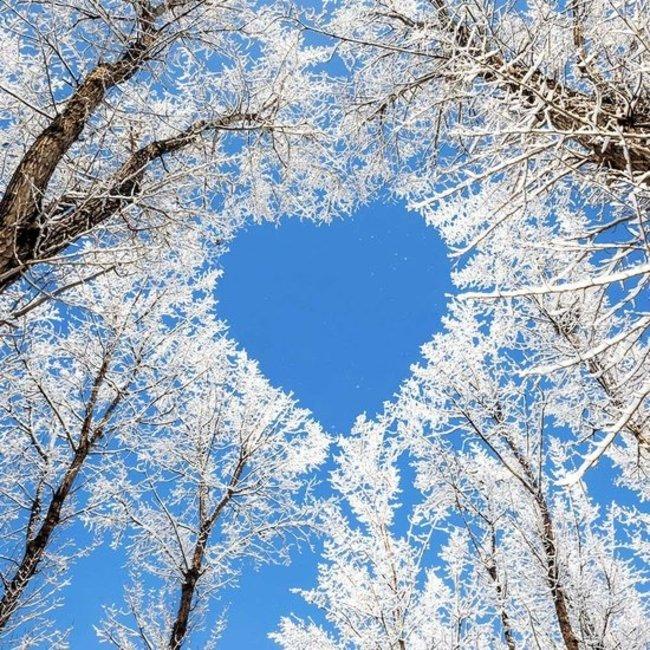 PURPL Panel Árbol de invierno Cielo | Imagen sobe lienzo en marco Led | [img22]