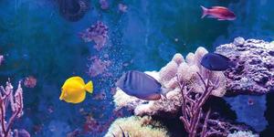 Convierte tu acuario en un elemento de diseño con iluminación LED