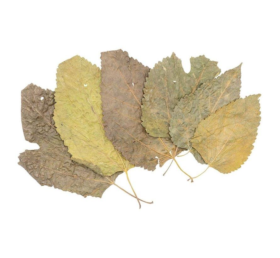 Moerbei bladeren