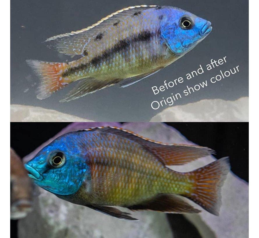 Origin Aquatic Nutrition Show Colour