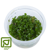 Tropica Bacopa caroliniana - 1-2-Grow!