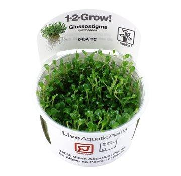 Tropica Glossostigma elatinoides - 1-2-GROW!