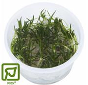 Tropica Littorella uniflora - 1-2-GROW!