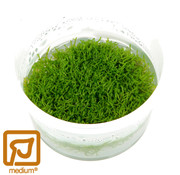 Tropica Riccia fluitans - 1-2-Grow!