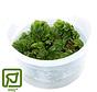 Salvinia auriculata (natans) - 1-2-Grow!