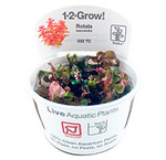 Tropica 1-2-Grow! In Vitro planten