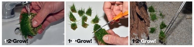 Planten van Tropica 1-2-Grow planten