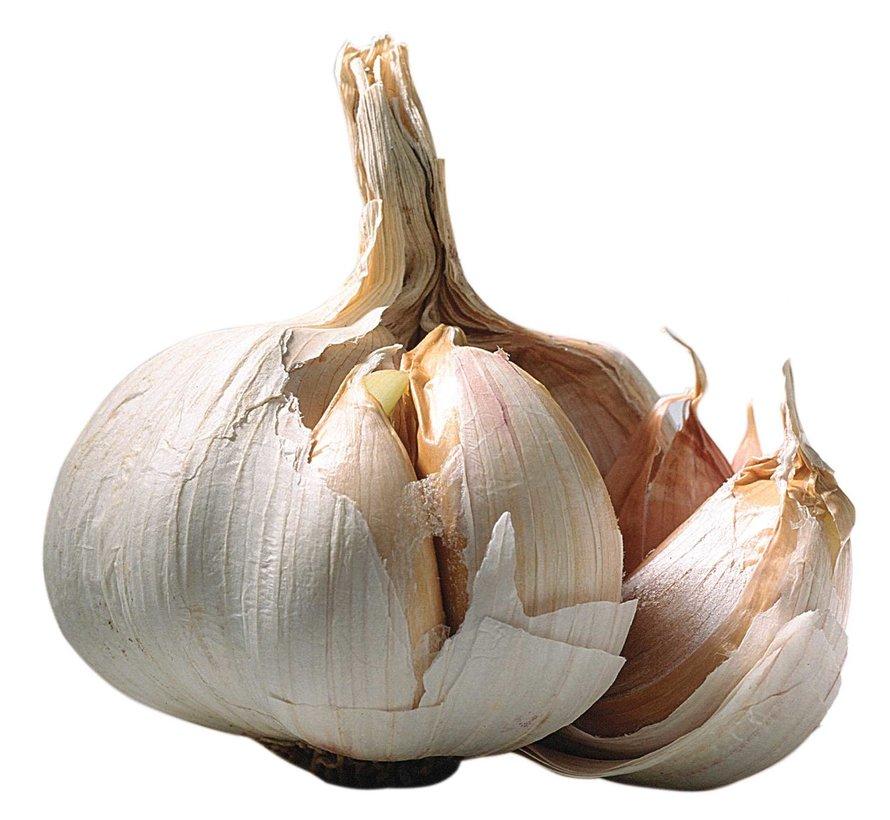 Dr. Bassleer Biofish Food Garlic