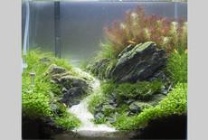 Hoe start je een nano garnalen aquarium op?