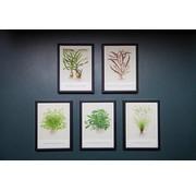 Tropica Tropica Art Cards Set 5x aquarel kaarten 13x18cm (incl Cyperus)