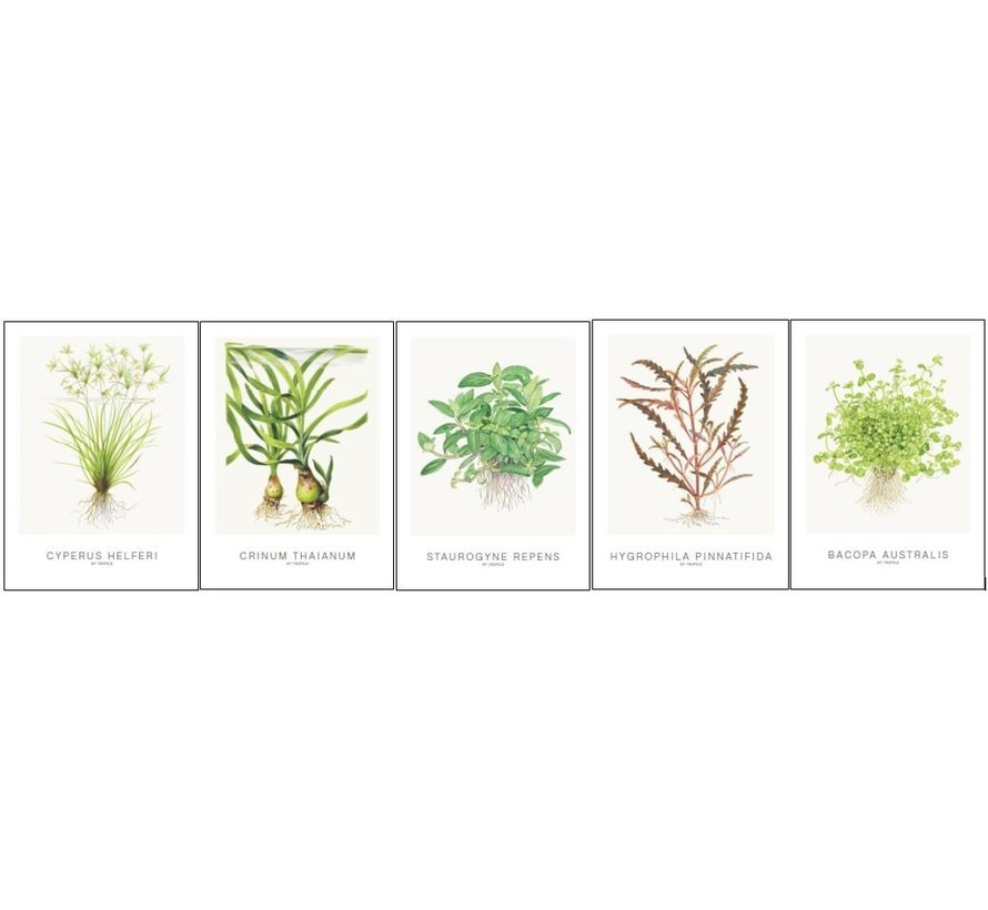 Tropica Art Cards Set 5x aquarel kaarten 13x18cm (incl Cyperus)