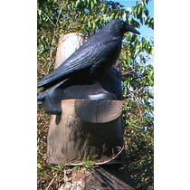 FB 3D raven in a tree