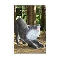 FB 3D klęczącej wilk