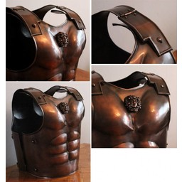 Spartan musculata