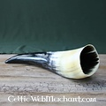 Drinking horn, several sizes
