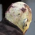 Epic Armoury Zombie maschera con cicatrici