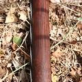"""Skytt båge 70"""" (178 cm) mörkbrun, 40 Ibs"""