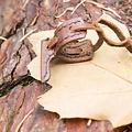 Epic Armoury Schedehaakje voor LARP zwaard, bruin