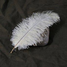 plume de crème, 20-25 cm