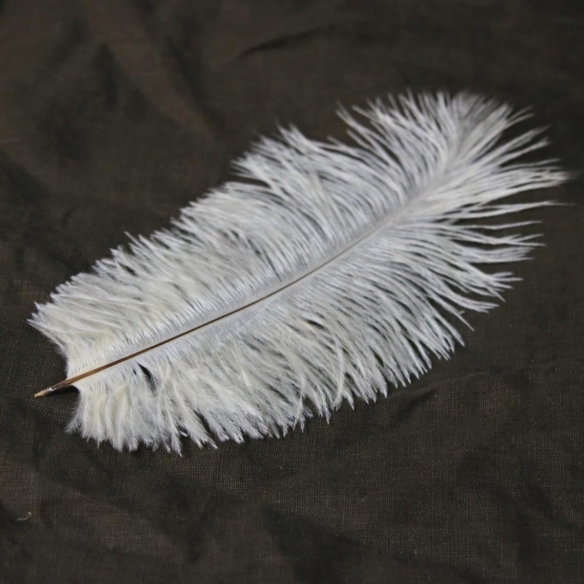 Cream feather, 20-25 cm