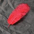 Pluma roja, 20-25 cm