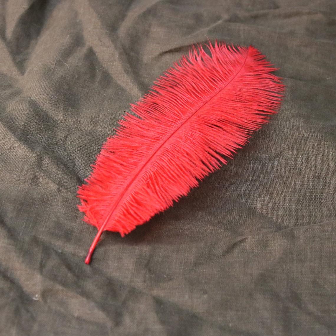 piuma rossa, 20-25 cm