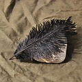 Black feather, 20-25 cm