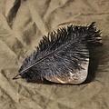 Czarne pióro, 20-25 cm