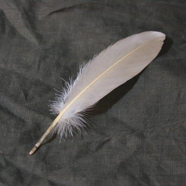 Gås fjäder ljusbeige, 15-21 cm