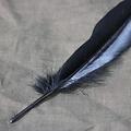 Ganzenveer zwart, 15-21 cm
