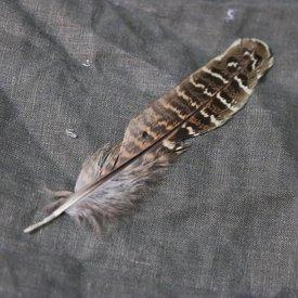 Fasan fjäder, 10-18 cm
