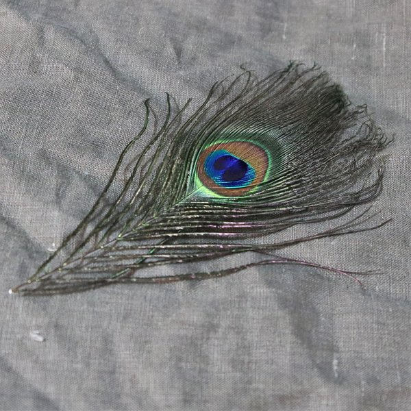 Peacock fjer, 20 cm
