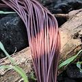 Leren veter, set van 10 zwart