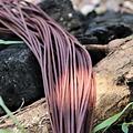 cordón de cuero, un conjunto de 10 marrón
