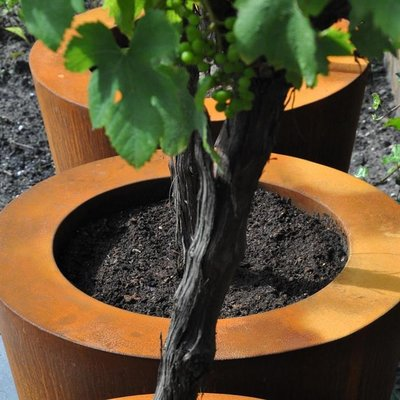 Plantenbak Cado in Cortenstaal, diverse maten , ook grote plantenbakken