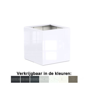 Buxus vierkant - kubus - glossy  ...v.a.
