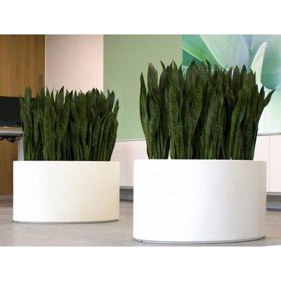 Grote polyester plantenbak Ellipse hoogglans, diverse maten en kleuren  - ovaal