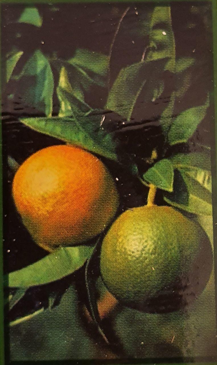 Апельсиновое масло 30 мл