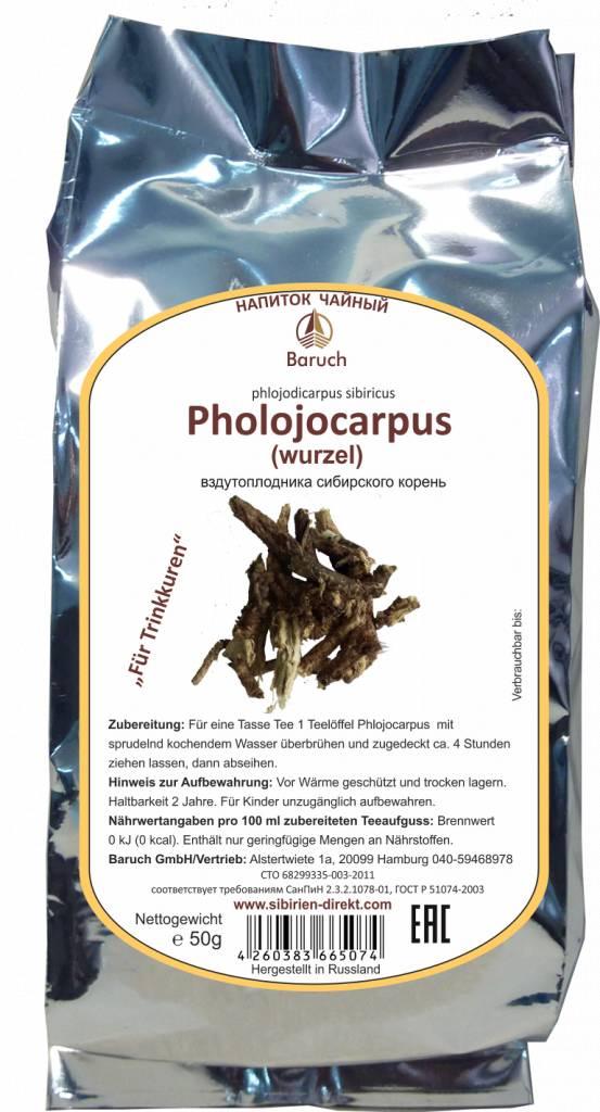 Phlojodicarpus sibiricus