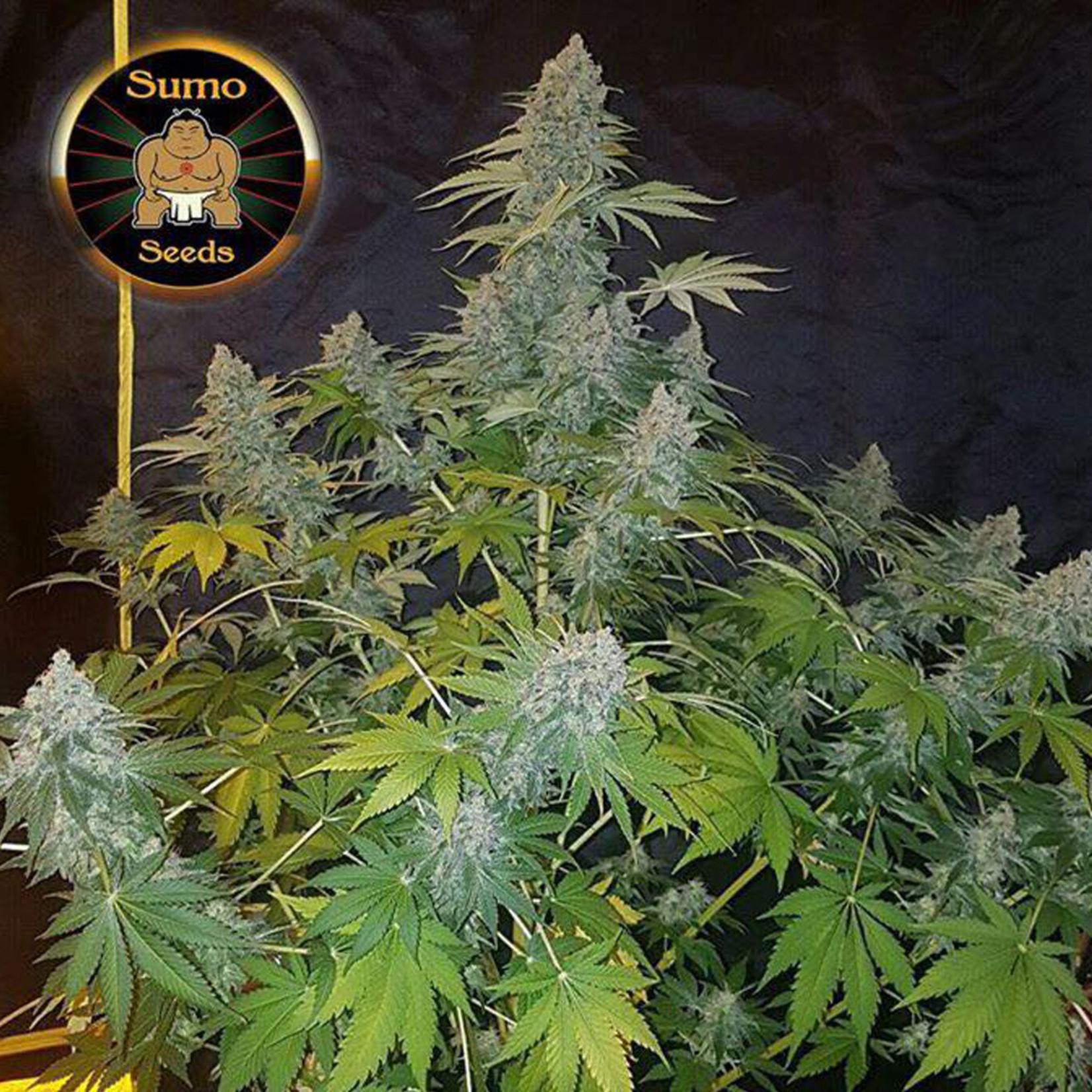 Appleberry cannabis seeds